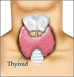 signs of thyroid problems How To Increase An Underactive Thyroid